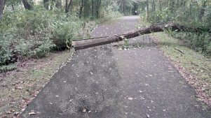 fallen tree on trail