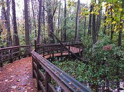 leaf covered boardwalk
