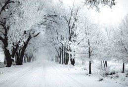 snow covered road & trees