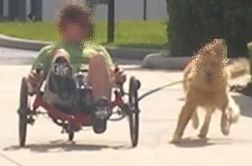 bike tow leash on trike