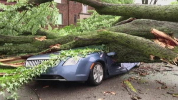 tree fallen onto car