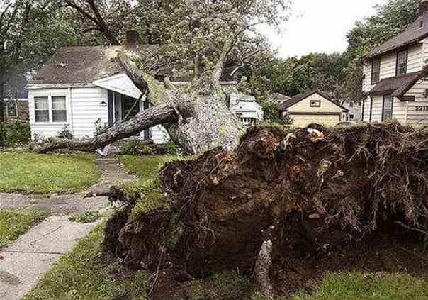 tree uprooted and fallen onto house