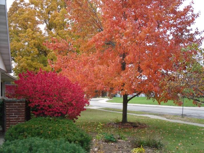 autumn colors 002