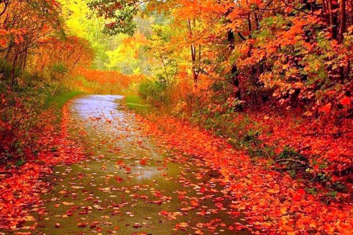 fall colors along trail 2