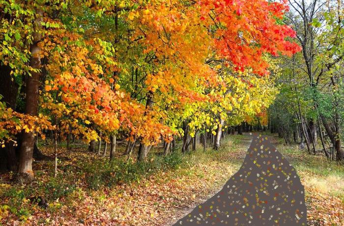 fall colors along trail 3