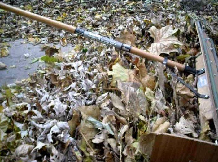 leaf removal 4