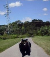 bear chasing on bike trail