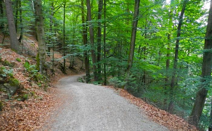 embankment along side of trail