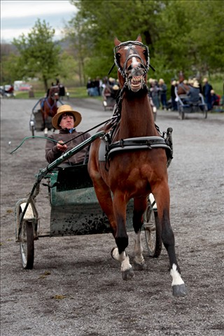 Amish horse acting up