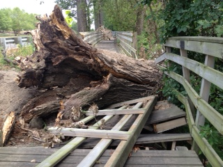 nh boardwalk tree damage 2