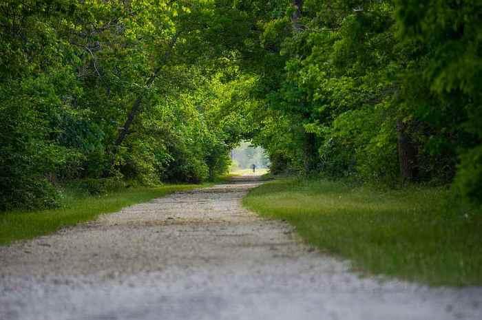 paved trail thru green trees