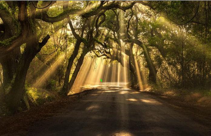sun rays shining down thru tree foliage marked