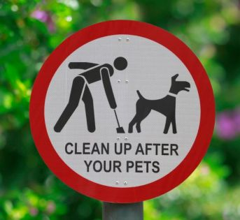 clean-up-after-your-dog