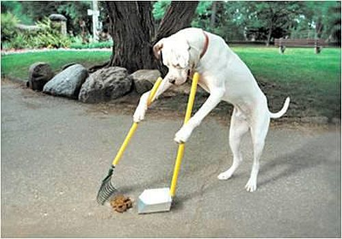 dog-cleaning-up-poop