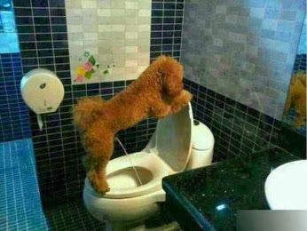 dog-urinating-in-commode